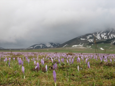 Gran Sasso and the chorus of crocuses